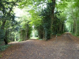 Transition woodland paths